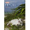 岩合光昭の世界ネコ歩き 沖縄 DVD 10P03Dec16