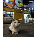岩合光昭の世界ネコ歩き チリ ブルーレイ