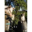 岩合光昭の世界ネコ歩き ウルグアイ DVD