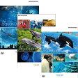 水族館−An Aquarium 沖縄・京都・名古屋港 全3枚セット DVD
