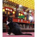 500円クーポン発行中!岩合光昭の世界ネコ歩き 台湾