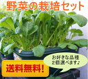 野菜 栽培セット 栽培キット 選べる2個セット 野菜 家庭菜園キット 家庭菜園セット 園芸 ガーデニ