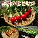 野菜 栽培セット 選べる2個セット 野菜 家庭菜園キット 家...