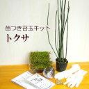 苔玉作成キット 植物苗がついている 苔玉キット 苗付(トクサ) 手作り 初心者 こけだまの材料 かんたん作成キット 苗・苔・苔玉用に配合した土・糸・作り方のしおりセット・樹種別育て方のしおりセット