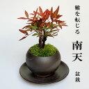 盆栽 南天の盆栽 下皿セット 黒鉢 縁起物 ギフト  贈り物 観葉植物 開運 難