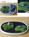 苔が主役の苔盆栽!材料すべてお届けします【苔盆栽(こけぼんさい)キット〜富士砂】
