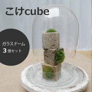 苔盆栽 こけキューブ 器 ガラスドームつき ×3個セット つんだり・ならべたり・ちいさな苔