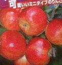 【6寸鉢植え】アルプス乙女りんご(乙女リンゴ、姫りんご)《果樹苗》