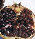 【5寸鉢植え】ペルシャブラック(ペルシャザクロ)《果樹苗》