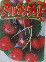 アメリカンチェリー(サクランボ) サミット 《果樹苗》「☆」