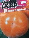次郎柿(甘柿)《果樹苗》「☆」
