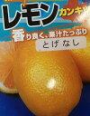 トゲナシレモン(シチリアレモン)《果樹苗》「☆」