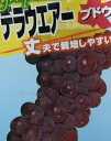 デラウェア(ぶどう挿し木) 苗木 苗 ブドウ 葡萄《果樹苗》