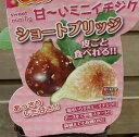 【小苗】 ショートブリッジ(イチジク)《果樹苗》「☆」