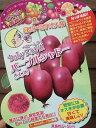 ベビーキウイ:パープルシャドー(メス木):《果樹苗》*樹高約5センチ程度! 「☆」