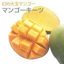 キーツマンゴー 接木苗 《熱帯果樹苗》「☆」