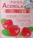 【大株】アセロラ《熱帯果樹苗》「☆」