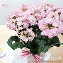 早得ポイント10倍母の日ギフトアジサイケイコ(ピンク)母の日ギフト贈り物プレゼントあじさい紫陽花5号鉢