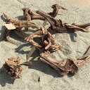 資 形おまかせ 流木 マングローブ M 約30cm