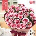まだまだ間に合う母の日 ギフト 選べるカーネーション 16色 母の日 贈り物 プレゼント 花 鉢植え 5号鉢 送料無料 母…