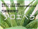 アロエベラ(食用アロエ・ジュース・万能薬・4号鉢)