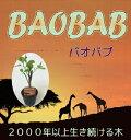 バオバブ(Baobabu Adansonia digitata)セネガルからやってきた長寿の木 珍しい植物 3.5号鉢