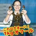 【訳あり】特大1kgオマール海老【送料無料】【楽ギフ_のし】