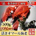 天然 活オマール海老(500g)10尾入