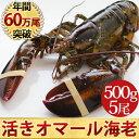 天然 活オマール海老(500g)5尾入