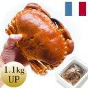 天然ボイル済ヨーロッパイチョウガニ(1.1kg UP)1杯