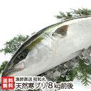 日本海 一本釣り 天然寒ブリ(一尾丸ごと) 8kg前後 漁師...