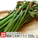 新潟産 朝採り天然ワラビ 350g(70g×5袋)【採れたて直送/新鮮/鮮度抜群/山菜の天ぷら
