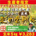 【玄米】生産者指定!JGAP認定農場のコシヒカリ【新潟県長岡市旧越路町産】「越の金翔米」玄米5キロ!