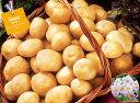 【種ジャガイモ・種いも】フレンチポテト「サッシー」の種じゃがいも 約500g入