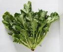 【香味菜】ケールッコラ 9cmポット苗 2本セット【9月下旬より出荷】