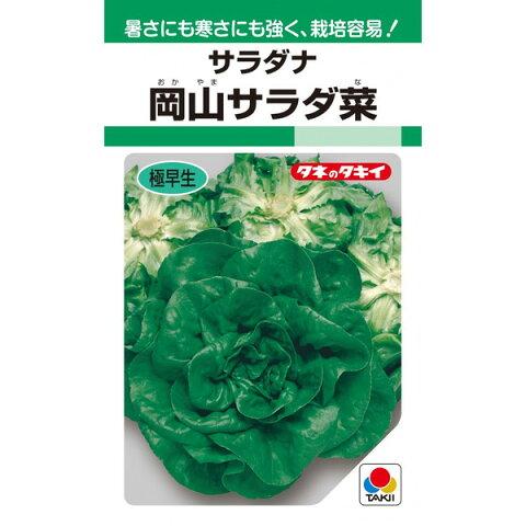 タキイ種苗 岡山サラダ菜 2ml【郵送対応】