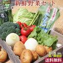 【送料無料】 新鮮野菜詰め合わせセット14品 九州産 佐賀県...