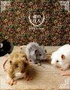 ネズミ ぬいぐるみ リアル HANSA《野ネズミ》【N-CN-M】【ねずみのぬいぐるみ】【小動物のぬいぐるみ】【無料ラッピング&カード】【誕生日】【プレゼント】