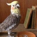 インコ リアル クリップホルダー《リアルなオカメインコのクリップホルダー》【N-MG】【鳥雑貨】