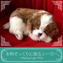 【本物そっくりに眠るシーズーのぬいぐるみ】パーフェクトペット|犬のぬいぐるみ|動くぬいぐるみ|誕生日