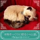 【本物そっくりに眠るシャム猫のぬいぐるみ】パーフェクトペット|猫のぬいぐるみ|動くぬいぐるみ|誕生日|クリスマス|プレゼント|ギフト|お見舞い|ペットロス