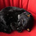本物そっくりに眠るぬいぐるみパーフェクトペット【黒猫】リアル 猫 動く ぬいぐるみ ギフト プレゼント 誕生日 クリスマスお見舞い ペットロス