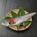 送料無料 北海道 お取り寄せ 知床産 鮭児 ケイジ 生冷凍 半身 約900g~1000g ルイベ刺身に