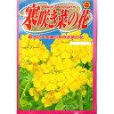 アタリヤ 寒咲き菜の花 メール便対応(15個まで) 4971374227767