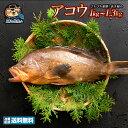 アコウ (生) 1尾 約 1kg〜1.3kg 香川の超高級魚!天然 アコウ 香川県産 冷蔵  グルメ