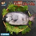 イシダイ 石鯛 (生) 1尾 約1kg〜1.5kg 天然 香川県産 神経抜き 冷蔵  グルメ