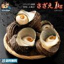 サザエ さざえ (殻入り) 1kg (4〜5個) 天然サザエ 香川県産 冷蔵  グルメ