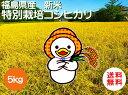 福島県産アヒル米コシヒカリ 平成30年産新米5kg