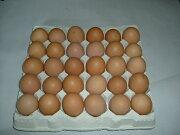 もったいないたべてご卵30個入り【有精卵】1個あたり35円