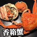 【送料無料】能登半島 訳あり香箱蟹(甲箱蟹・こうばこがに)10杯セット